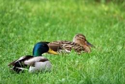 ...najlepše pa je opazovati parčke... bodisi medtem, ko počivajo na obrežju...