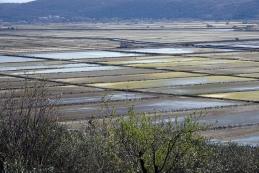 Pogled na Sečoveljske soline