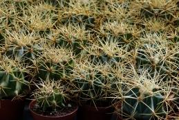 Vrt kaktusov