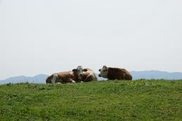 Krave na Zabreški planini