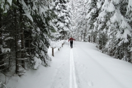 ...novembra 2010 dan po sneženju...